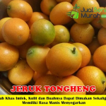 Bibit Jeruk Tongheng 70cm