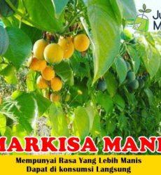 Markisa Manis