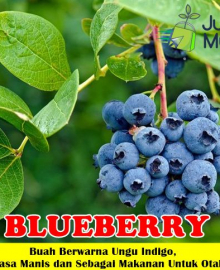 Blueberry Unggul
