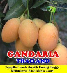 Gandaria Thailand
