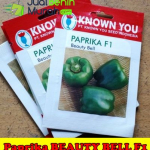 Benih Paprika Hijau Beauty Bell F1 (Known You Seed)