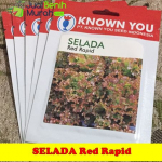 Benih Selada Keriting Merah Red Rapid (Known-You Seed)