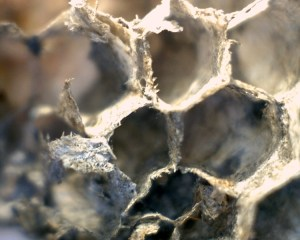 44301-wasp-nestiii