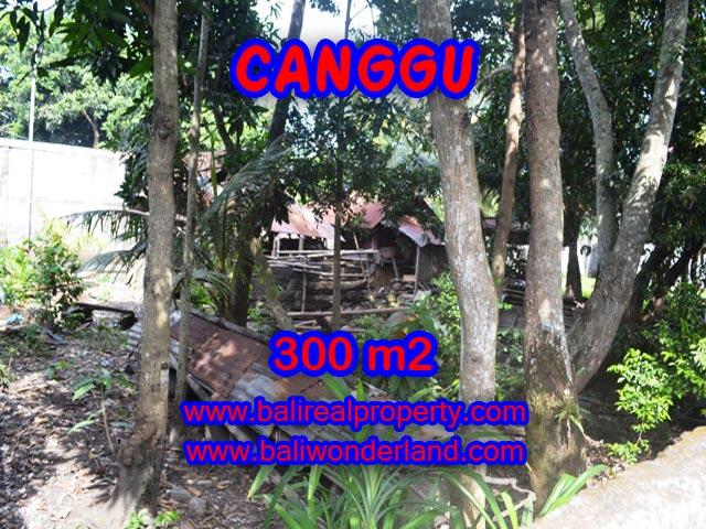 Tanah di Canggu Bali dijual 300 m2 di Kerobokan