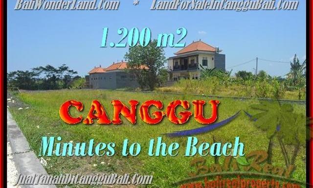 JUAL TANAH MURAH di CANGGU 1.200 m2 View sawah lingkungan villa