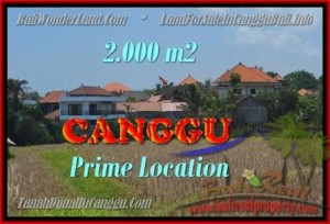 TANAH MURAH  di CANGGU BALI DIJUAL 2.000 m2  View sawah lingkungan villa