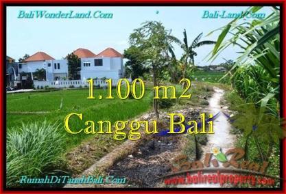 JUAL MURAH TANAH di CANGGU BALI 11 Are View sawah, lingkungan villa