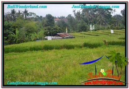 TANAH di CANGGU JUAL 3.35 Are View sawah, sungai, lingkungan villa