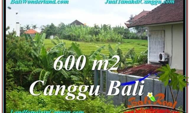 JUAL TANAH MURAH di CANGGU BALI 600 m2 View sawah lingkungan villa