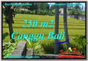 DIJUAL TANAH MURAH di CANGGU BALI 250 m2 di Canggu Pererenan