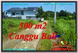 DIJUAL TANAH MURAH di CANGGU 500 m2 di Canggu Brawa