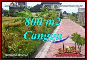 TANAH MURAH di CANGGU JUAL 800 m2 View sawah, lingkungan villa