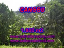Jual tanah di Canggu Bali 1.800 m2 view sawah,sungai di canggu brawa