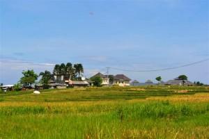 Tanah dijual di Canggu Bali 885  m2 di Canggu Pererenan