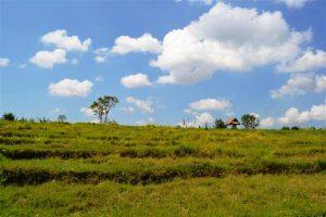 Tanah dijual di Canggu Bali view sawah di Lingkungan Villa – TJCG052E