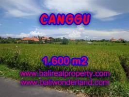 Jual Tanah murah di CANGGU TJCG139 - investasi property di Bali