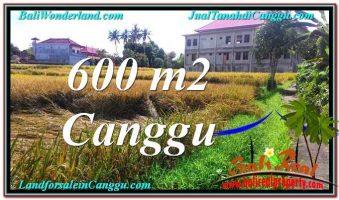 TANAH MURAH di CANGGU BALI DIJUAL 600 m2 di Canggu Pererenan