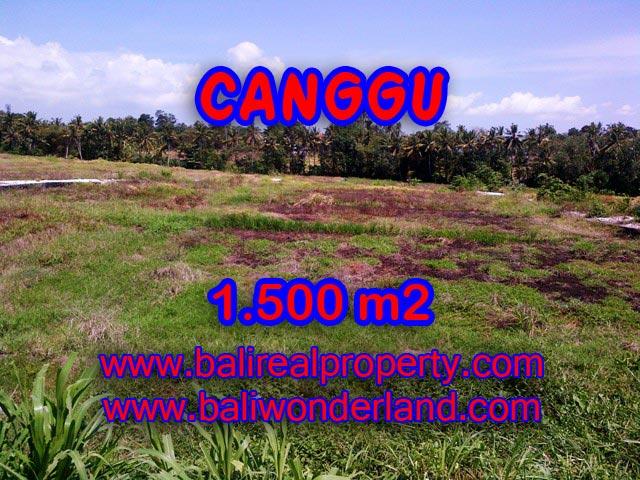 Tanah di Canggu dijual 15 Are View sawah di Tumbak Bayuh