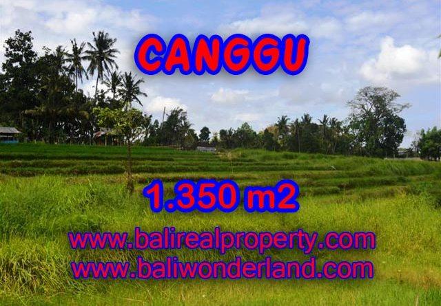 Tanah dijual di Bali 1.350 m2 view sawah,sungai di Canggu Pererenan