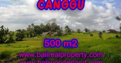 Jual tanah di Canggu 5 Are di Batu Bolong Bali