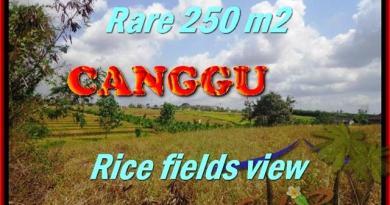 TANAH di CANGGU DIJUAL MURAH 250 m2 di Canggu Brawa