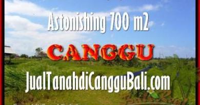 TANAH DIJUAL di CANGGU BALI 7 Are di Canggu Kayutulang