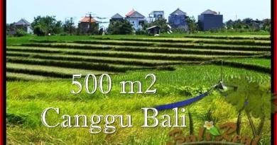 TANAH MURAH di CANGGU 5 Are View sawah, lingkungan villa