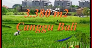 TANAH JUAL MURAH CANGGU BALI 3,380 m2 View sawah, lingkungan villa