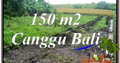TANAH MURAH di CANGGU 1.5 Are View sawah