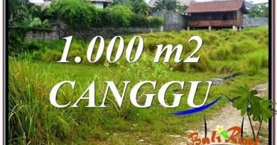 JUAL TANAH MURAH di CANGGU 1,000 m2 View sawah, sungai, laut