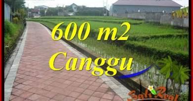 TANAH MURAH di CANGGU JUAL 600 m2 View sawah, lingkungan villa