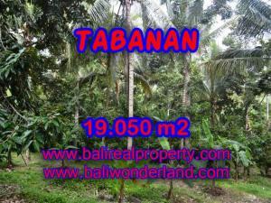 TANAH MURAH DIJUAL DI TABANAN BALI TJTB092 - PELUANG INVESTASI PROPERTY DI BALI