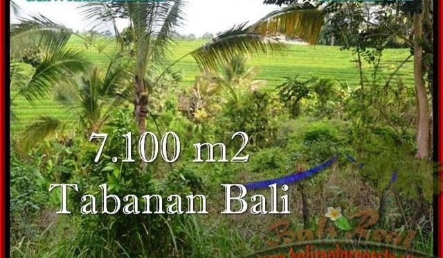 TANAH di TABANAN BALI DIJUAL MURAH 7,100 m2 di Tabanan Selemadeg