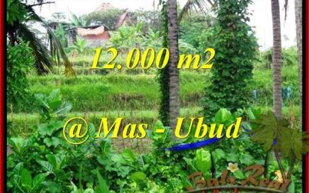 TANAH DIJUAL MURAH di UBUD BALI 120 Are di Sentral Ubud