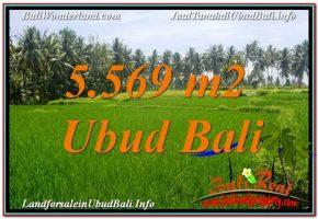 TANAH di UBUD BALI DIJUAL MURAH 5,569 m2  View Sawah dan Sungai Kecil