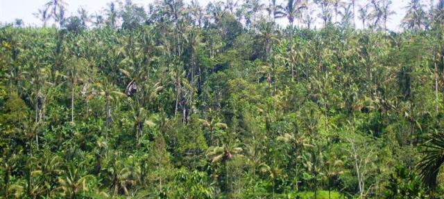 TJUB072 Jual tanah di Ubud Bali