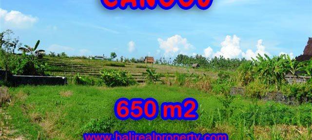 Tanah dijual di Canggu 650 m2 View sawah di Canggu Batu Bolong