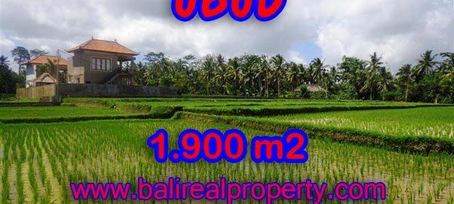 Tanah dijual di Ubud Bali 1.900 m2 view sawah dekat sungai di Dekat sentral Ubud