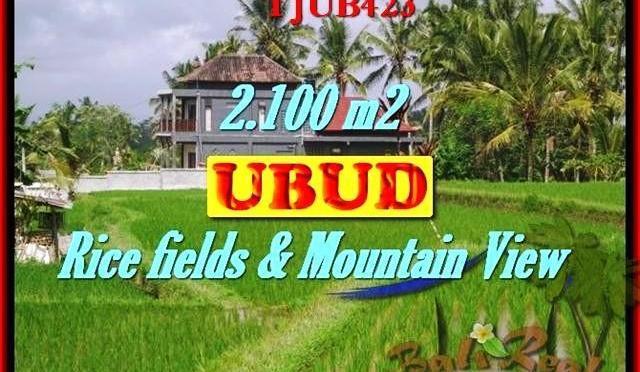 JUAL MURAH TANAH di UBUD 21 Are di Ubud Tegalalang