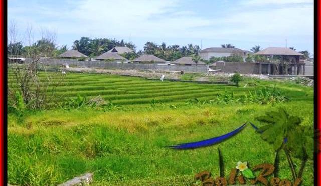 JUAL TANAH MURAH di CANGGU BALI 1.450 m2 view sawah, laut dan gunung