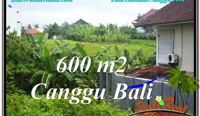 TANAH JUAL MURAH CANGGU BALI 600 m2 View sawah lingkungan villa