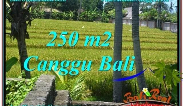 TANAH MURAH di CANGGU BALI 250 m2 View sawah lingkungan villa