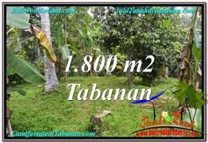 TANAH di TABANAN BALI DIJUAL MURAH 1,800 m2 di Tabanan Penebel