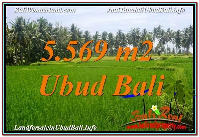 DIJUAL TANAH MURAH di UBUD BALI 5,569 m2  View Sawah dan Sungai Kecil