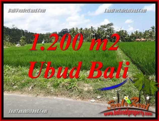 Tanah di Ubud Bali Dijual 12 Are View sawah, lingkungan Villa