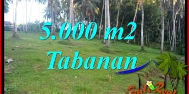 JUAL Tanah di Tabanan Bali 5,000 m2 View Kebun