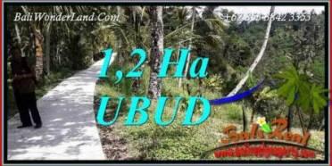 Investasi Property, jual Tanah di Ubud TJUB740