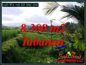 TANAH di TABANAN DIJUAL 8,300 m2 di PENEBEL TABANAN