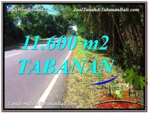 JUAL TANAH MURAH di TABANAN 11,600 m2 di Tabanan Selemadeg