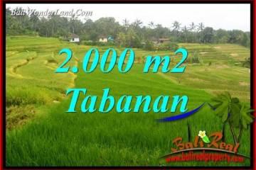 Dijual Murah Tanah di Tabanan 2,000 m2 di Tabanan Selemadeg